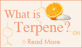 What is Terpene?